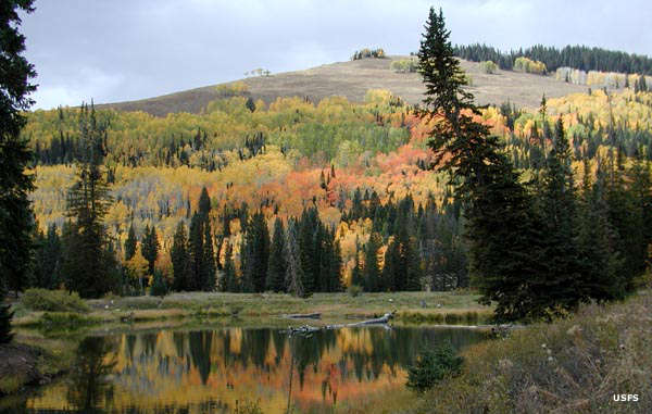 Looking across a pond and up a hill filled with aspens in fall colors