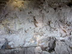 Fossilized dinosaur bones in the Quarry wall