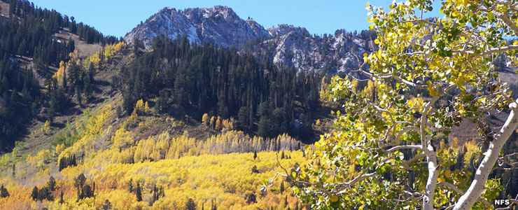 A scene along the Big Cottonwood Canyon Scenic Byway