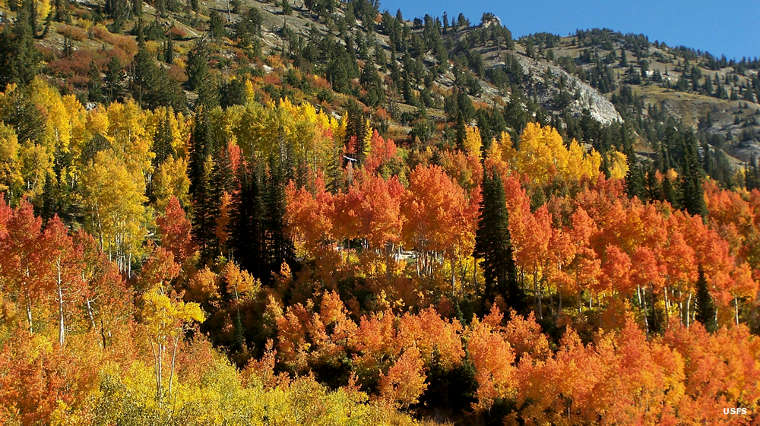 Autumn colors along the Little Cottonwood Canyon Scenic Drive