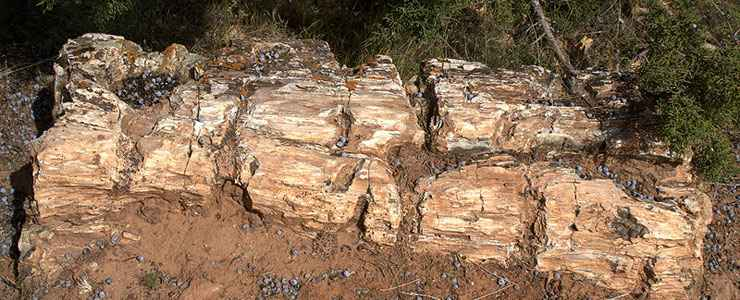 A large piece of petrified log at Escalante Petrified Forest State Park