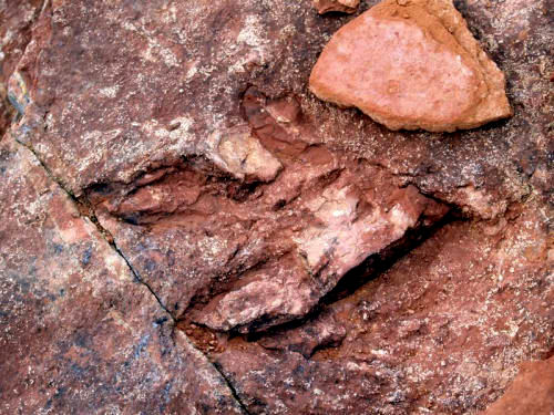 Dilophosaurus track found at Red Fleet State Park