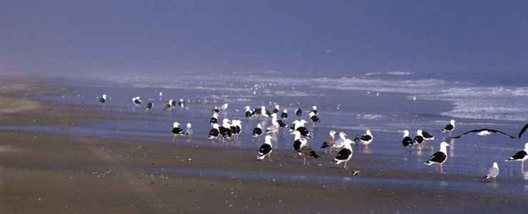 Gulls on the beach at Back Bay National Wildlife Refuge
