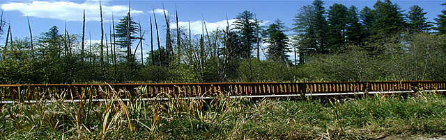 McMEET Trail Boardwalk at Little Pend Oreille National Wildlife Refuge
