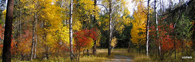 Autumn colors along the Webb-King Road
