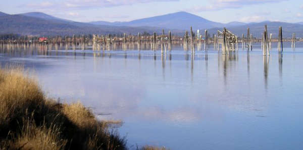 River pilings in the Pend Oreille River near Usk