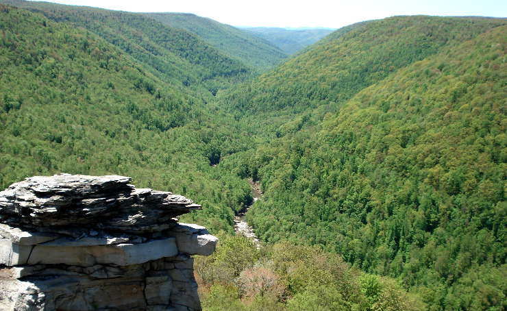 A view of Blackwater Canyon in Monongahela National Forest