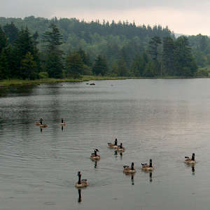 Spruce Knob Lake with geese
