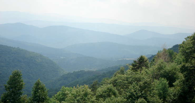 A view in Monongahela National Forest