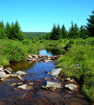 Red Creek in Dolly Sods Wilderness