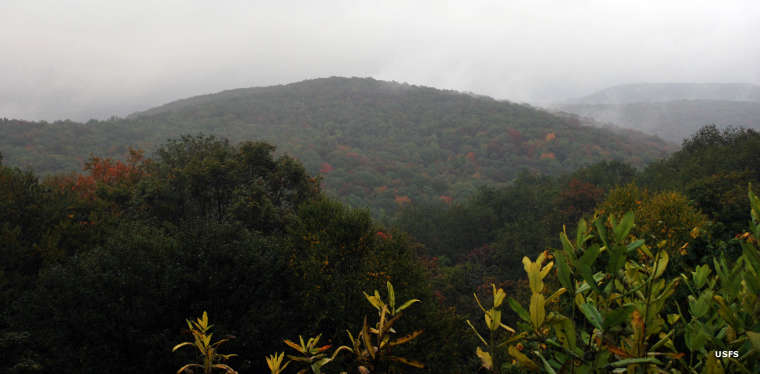 A rainy day at Laurel Fork South Wilderness