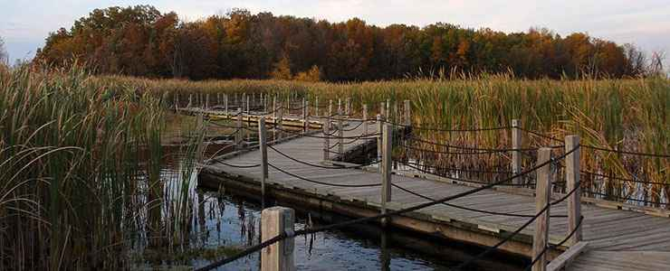 The boardwalk across the marsh at Horicon National Wildlife Refuge