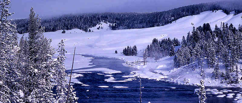 Winter scene in Yellowstone National Park