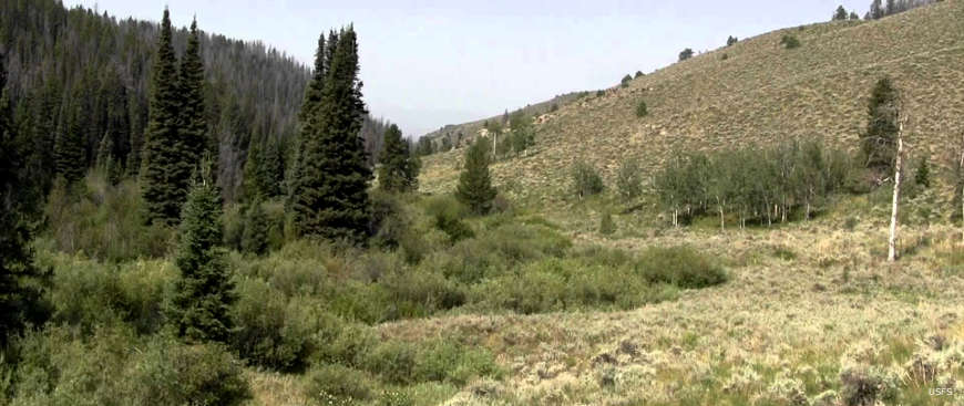Looking across a grassy meadow with pine trees on one side and a streambed down the middle