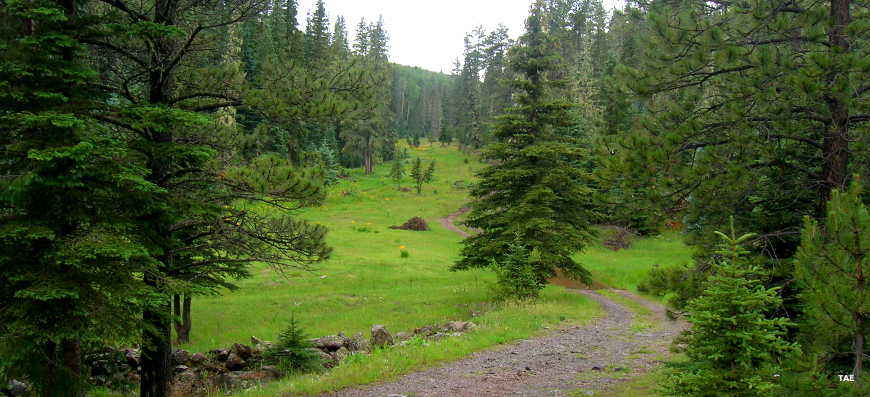 Apache-Sitgreaves National Forest | National Forests in ...