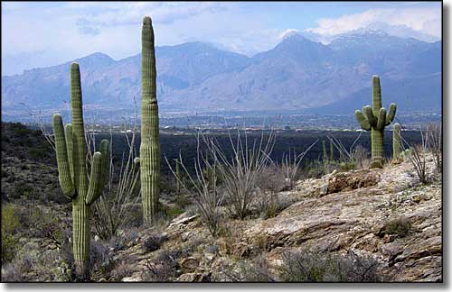 The Santa Catalina Mountains rise to the north