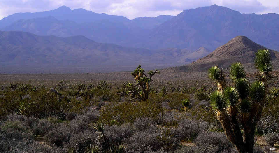 A view of the Kingston Range Wilderness area