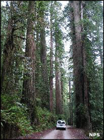 A scene in the forest along Howland Hill Road at Redwood National and State Parks