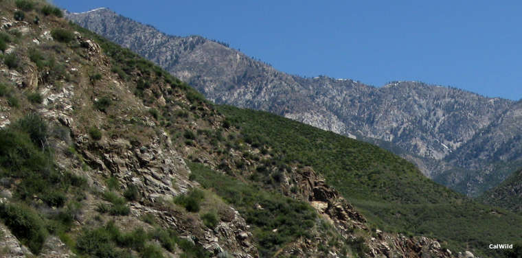 A view in the San Gabriel Wilderness area