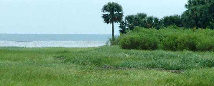 Wetlands, palms and open water along the shore at St. Marks National Wildlife Refuge