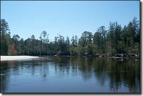 A view of Blackwater River flowing through the thick vegetation in Blackwater River State Forest