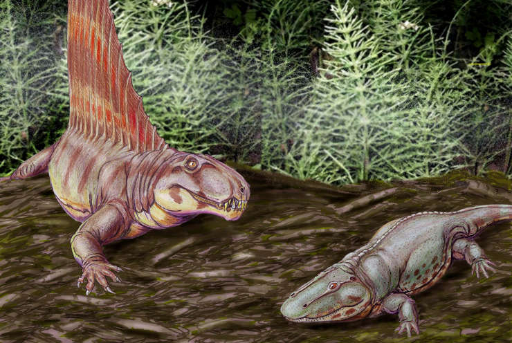 Image of a dimetrodon and an eryops from the Permian