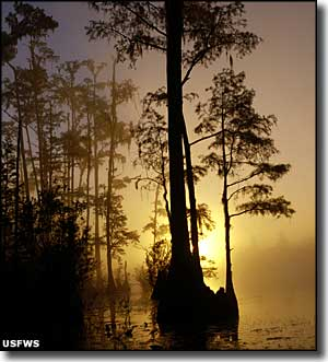 The sun setting through mist rising from Okefenokee National Wildlife Refuge
