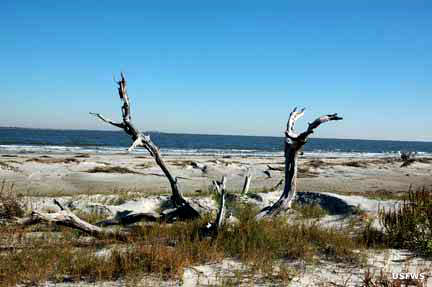 Driftwood and sand dunes on Boneyard Beach
