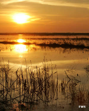 A sunrise view at Cameron Prairie National Wildlife Refuge