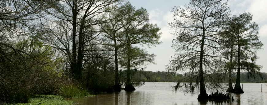 Open water and cypress swamp at Lacassine Wilderness