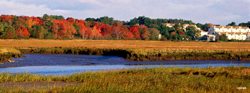 Wetlands in the fall at Rachel Carson National Wildlife Refuge