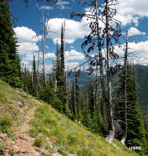 The trail in Kootenai National Forest