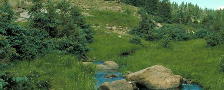 A small stream fows through a meadow in the forested San Pedro Parks Wilderness