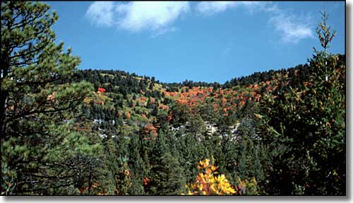 Manzano Mountain Wilde...