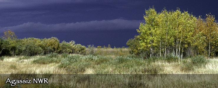 Agassiz National Wildlife Refuge, Minnesota