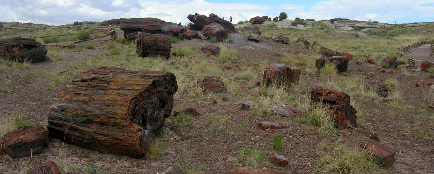 In the Big Logs area at Petrified Forest National Park