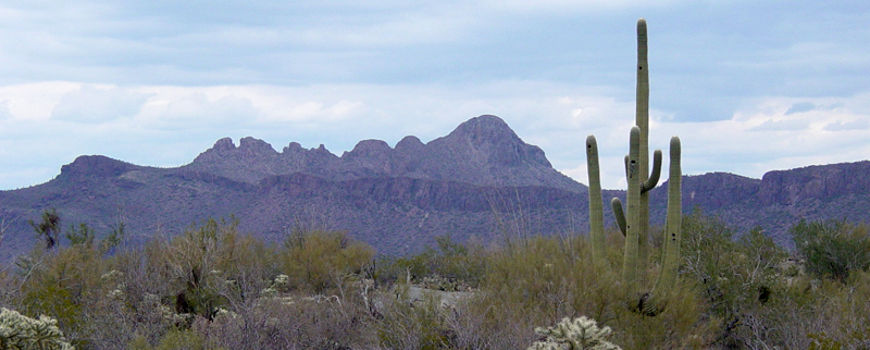 A view looking west in Saguaro National Park