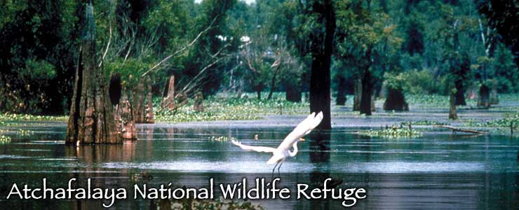 Atchafalaya National Wildlife Refuge