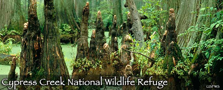 Cypress Creek National Wildlife Refuge