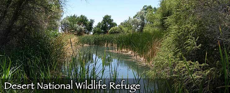 Desert National Wildlife Refuge