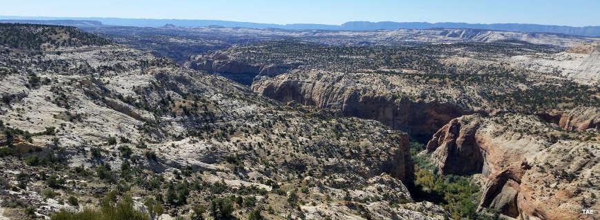 A view over Escalante Canyon