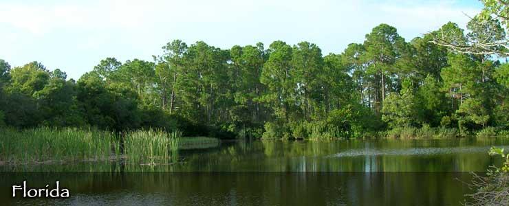 Cedar Key Wildlife Management Area, Florida