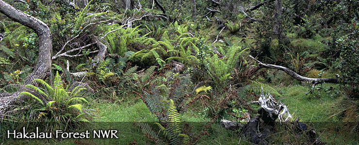 Hakalau Forest National Wildlife Refuge, Hawaii