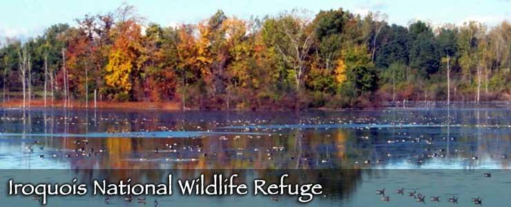 Iroquois National Wildlife Refuge