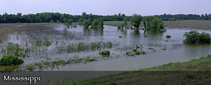 Panther Swamp National Wildlife Refuge, Mississippi