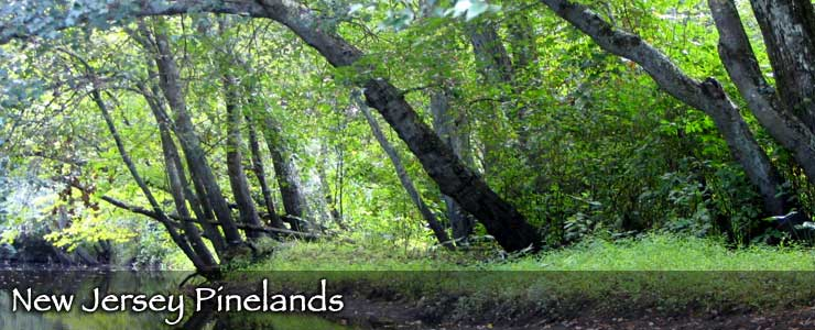 The New Jersey Pinelands