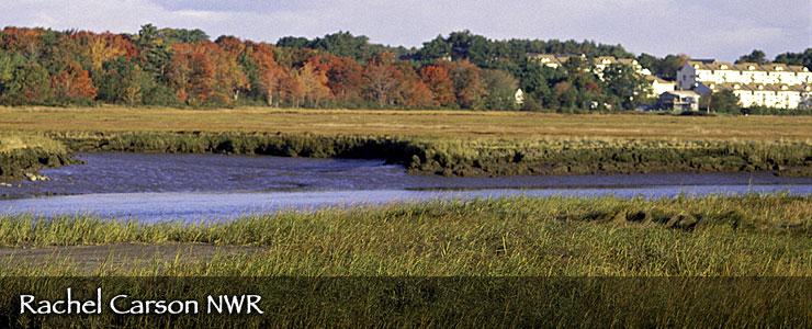 Rachel Carson National Wildlife Refuge, Maine