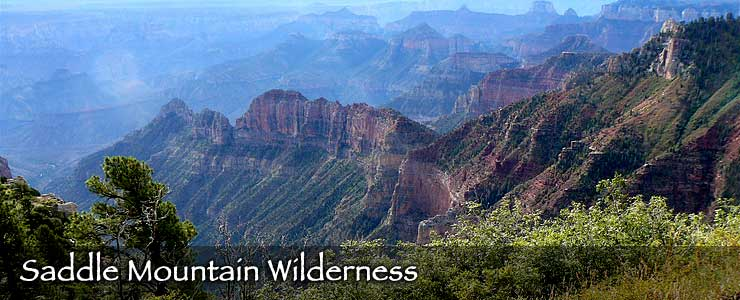 Saddle Mountain Wilderness
