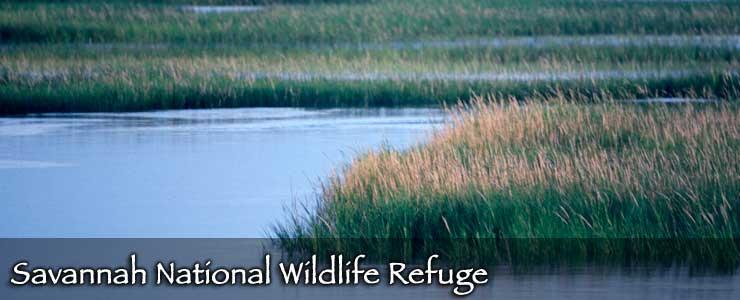 A salt marsh at Savannah National Wildlife Refuge