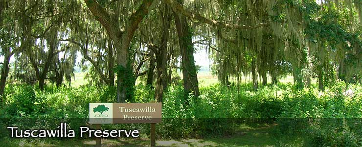 Tuscawilla Preserve, Alachua County, Florida